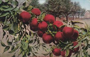 How Red Apples Grow In Oregon Fruit by Edward Mitchell