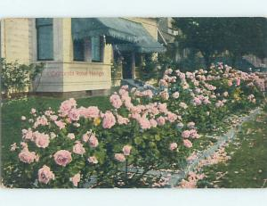 Divided-Back ROSE HEDGE BY HOUSE Postmarked Riverside California CA HM7542
