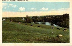 Maine Skowhegan Scene Along The Kennebec Cattle Grazing