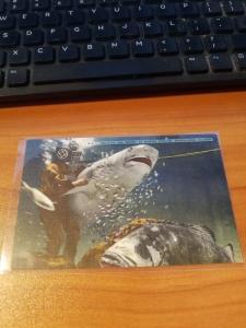 Antique/Vintage Florida Postcard, Walking the Shark at Marine Studios...