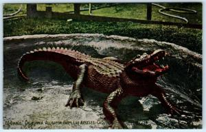 LOS ANGELES, CA    EL DIABLO  California Alligator Farm  ca 1910s  Postcard