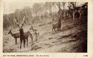 MA - Springfield. Forest Park, Deer Family