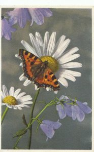Flower Postcard - Campanulas and Daisy with Red Admiral Butterfly - Ref 16832A