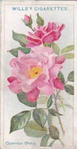 Wills Vintage Cigarette Card Roses A Series 1912 No 29 Common China