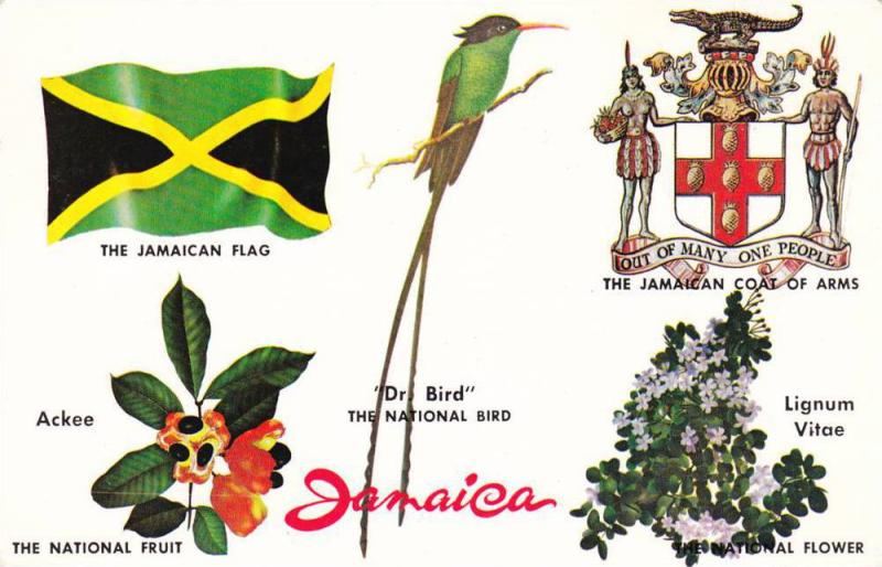 National Symbols Of Jamaica Flag Dr Bird Ligum Vitae Flower
