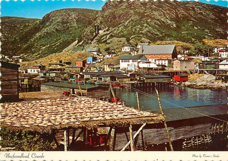 Petty Harbour Newfoundland fishing village Canada Postcard