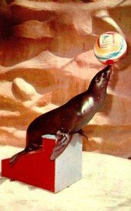 California San Diego Zoo California Sea Lion