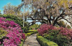 Louisiana Baton Rouge Beautiful Flowers In The Capitol Gardens