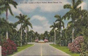 Florida Miami Beach Lanes Of Royal Palms Curteich