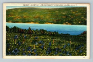 Canandaigua NY, Head Of Canandaigua Lake, Vineyards, Linen New York Postcard