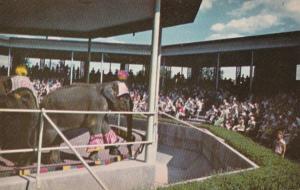 Elephants Elephant Show Forest Park St Louis Missouri