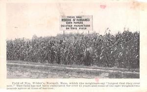 Advertising Post Card WM Wilder's Field, Corn Hubbards Bone Base Connect...
