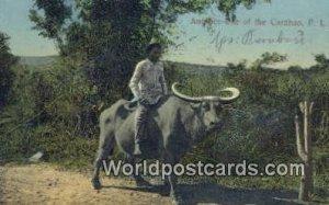 Carabao Philippines 1918