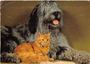 BF39514  cat chat dog chien animal animaux