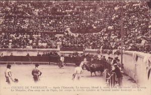 Bull Fight Course De Taureaux Matador and Bull
