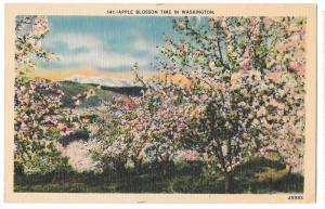 Apple Blossom Time in Washington State Vtg C P Johnston Linen Postcard