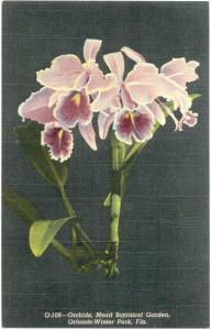 Orchid, Mead Botanical Garden, Orlando-Winter Park, Florida, Linen