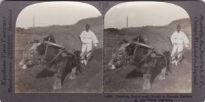 SV: 1910s ; Plowing Scene near SEOUL , Korea