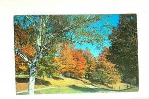 Tinmouth Vermont Fall Setting On Route 140 Postcard