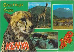 Greetings from KENYA, 1991 used Postcard