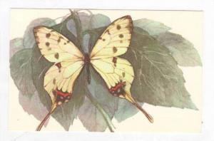 Yellow Butterfly, 1980-90s