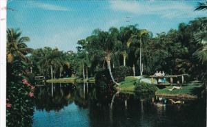 Florida Sarasota Scene In Sarasota Jungle Gardens 1964