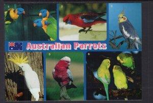 Australian Parrots BIN
