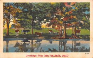 Big Prairie OH Cattle Find Shade by Odell Lake~1940s Linen Greetings