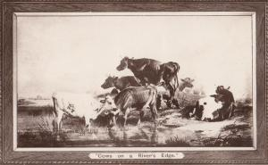 Cows Circus Formation Boots The Chemists Advertising RPC Postcard