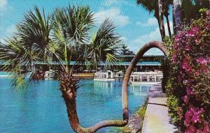 Florida Silver Springs The Horse Shoe Palm At Floridas Silver Springs