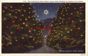 THE CHRISTMAS TREE STREET SANTA ROSA AVENUE ALTADENA, CA photo by Harold Parker