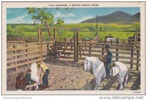 Calf Branding A Nevada Ranch Scene