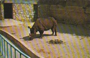Rhinocerus San Antonio Zoo San Antonio Texas