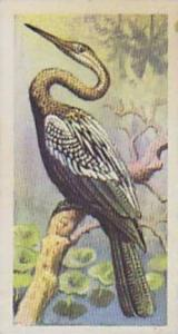 Brooke Bond Tea Vintage Cigarette Card Tropical Birds 1961 No 35 Indian Darter