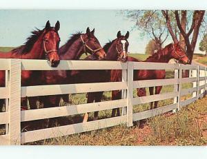 Vintage Post Card Horses Corral White Fences    # 4185