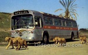 Greyhound Bus Buses, Old Vintage Antique Post Card Postcard  Greyhound