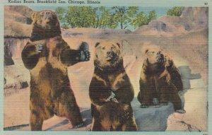 Kodiac Bears , Brookfield Zoo , CHICAGO , Illinois , 1930-40s