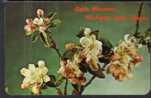 Apple Blossoms,Michigan State Flower