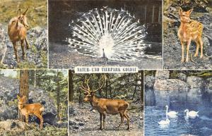 Natur und Tierpark Goldau Antelope Deer Swan Birds