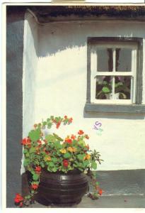 Ireland, Pot Plants, 1985 used Postcard