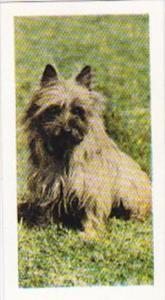 Hornimans Tea Trade Card Pets No 3 Cairn