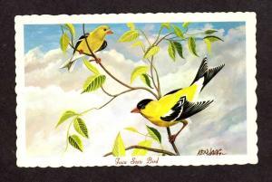 IA Iowa State Bird American Goldfinch Artist Signed Ken Haag Postcard PC