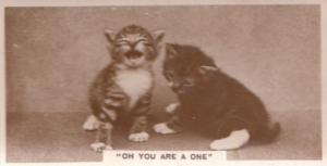 You Are An Attention Grabbing One Cat Old Real Photo Cigarette Card