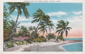 Florida Miami Palms Along The Shore
