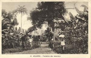 CPA Dahomey Afrique -  Adjarra - Plantation des bananiers (86824)