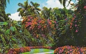 Florida Saint Petersburg Florida's Sunken Gardens In Saint Petersburg Is Ofte...