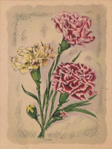 AS; P. Schierer, Pink and Yellow Carnations, 00-10s