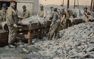 GLOUCESTER , Mass. , 00-10s ; Splitting Fish