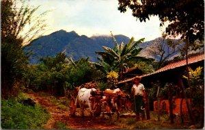 1960s COSTA RICA FARM MOUNTAIN OX CART - VINTAGE KODACHROME- POSTCARD