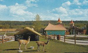Llamas , Children's Zoo , Storyland Valley , EDMONTON , Alberta, Canada , 50-60s